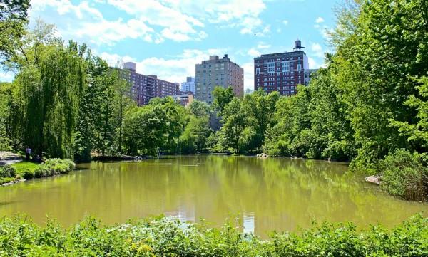 Piscina, Central Park, Nueva York